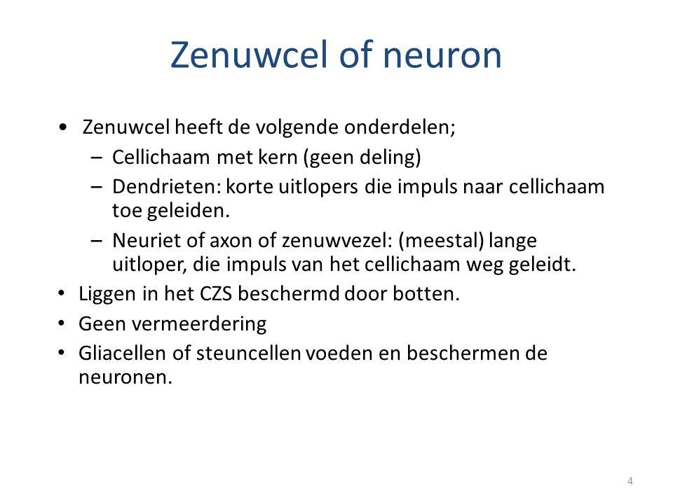 Zenuwcel of neuron Zenuwcel heeft de volgende onderdelen;
