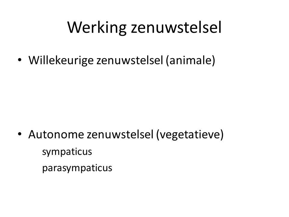 Werking zenuwstelsel Willekeurige zenuwstelsel (animale)