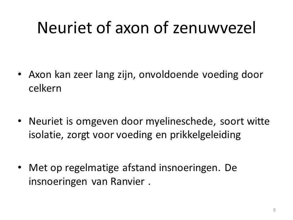 Neuriet of axon of zenuwvezel