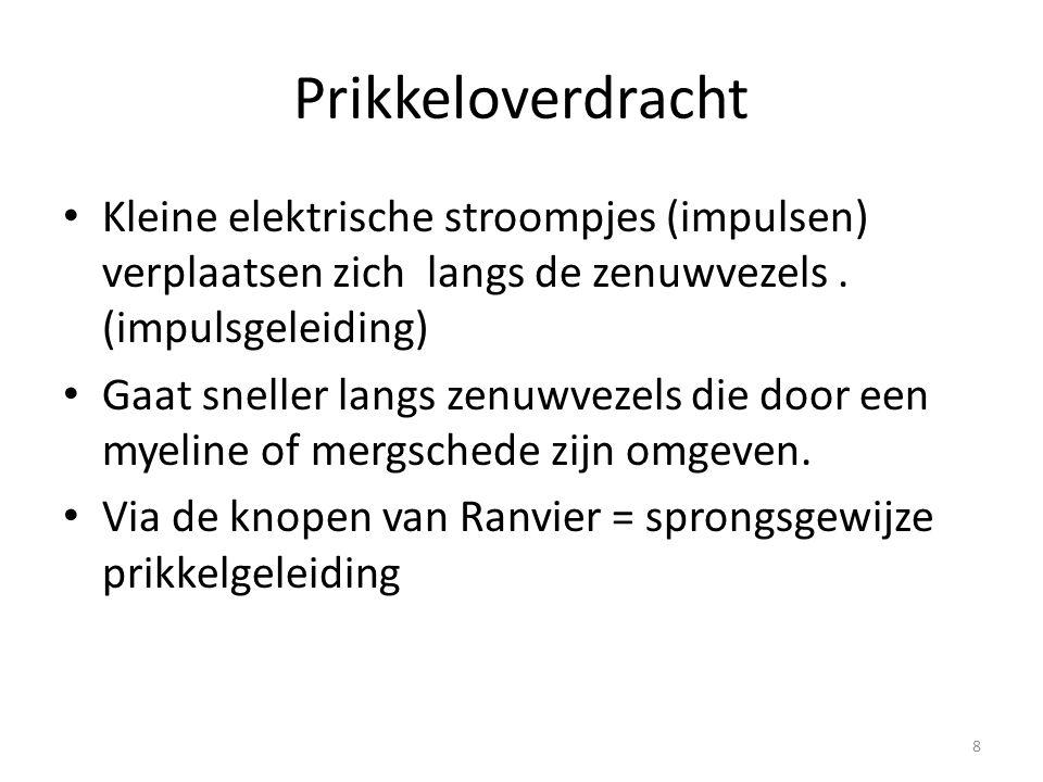 Prikkeloverdracht Kleine elektrische stroompjes (impulsen) verplaatsen zich langs de zenuwvezels . (impulsgeleiding)