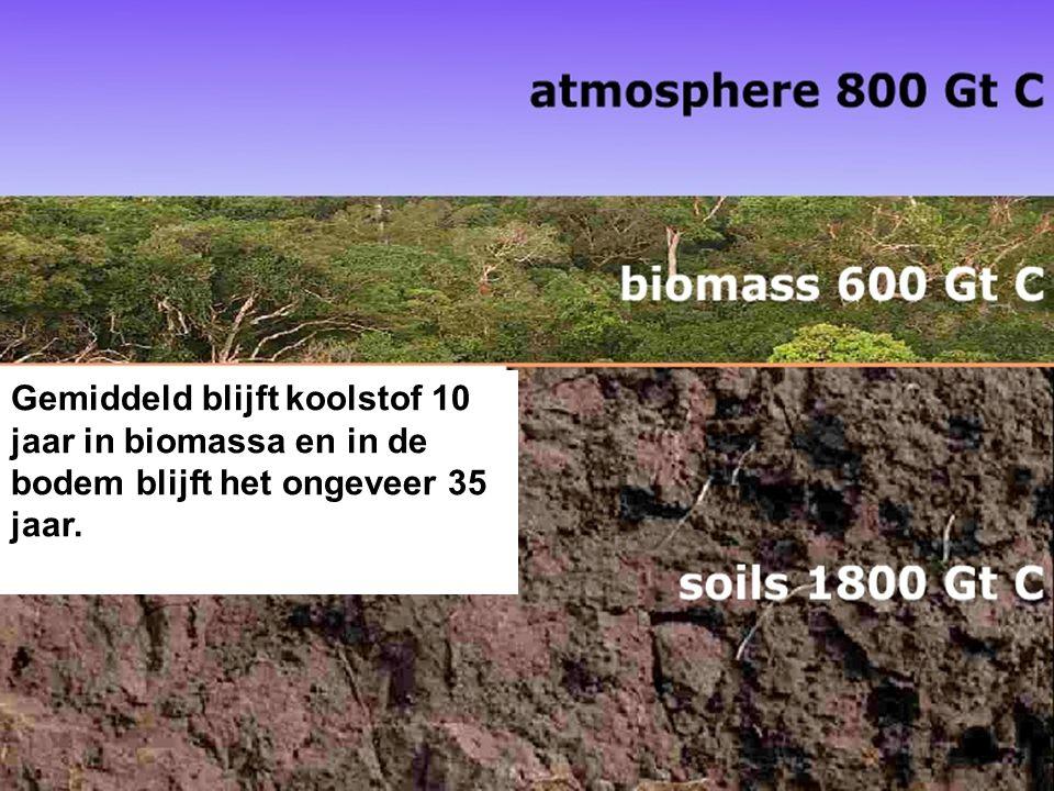 Gemiddeld blijft koolstof 10 jaar in biomassa en in de bodem blijft het ongeveer 35 jaar.