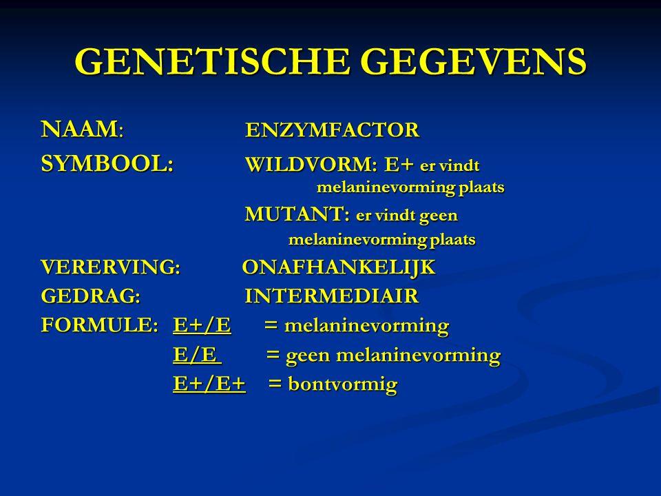 GENETISCHE GEGEVENS NAAM: ENZYMFACTOR