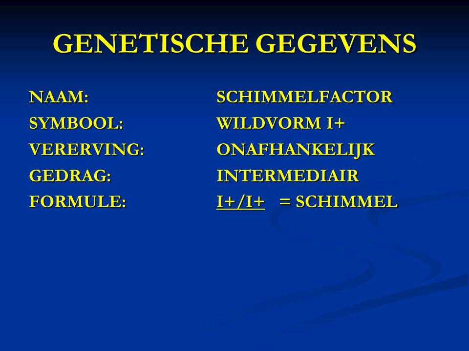 GENETISCHE GEGEVENS NAAM: SCHIMMELFACTOR SYMBOOL: WILDVORM I+
