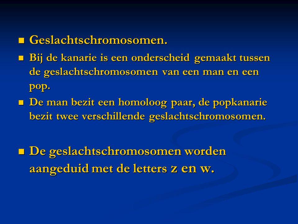 Geslachtschromosomen.