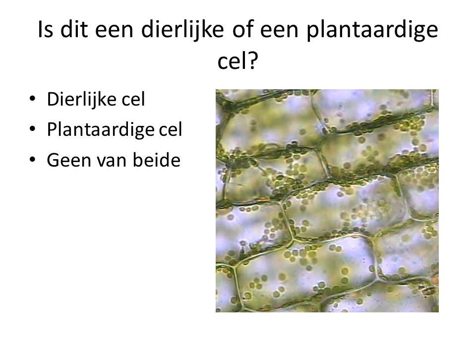 Is dit een dierlijke of een plantaardige cel