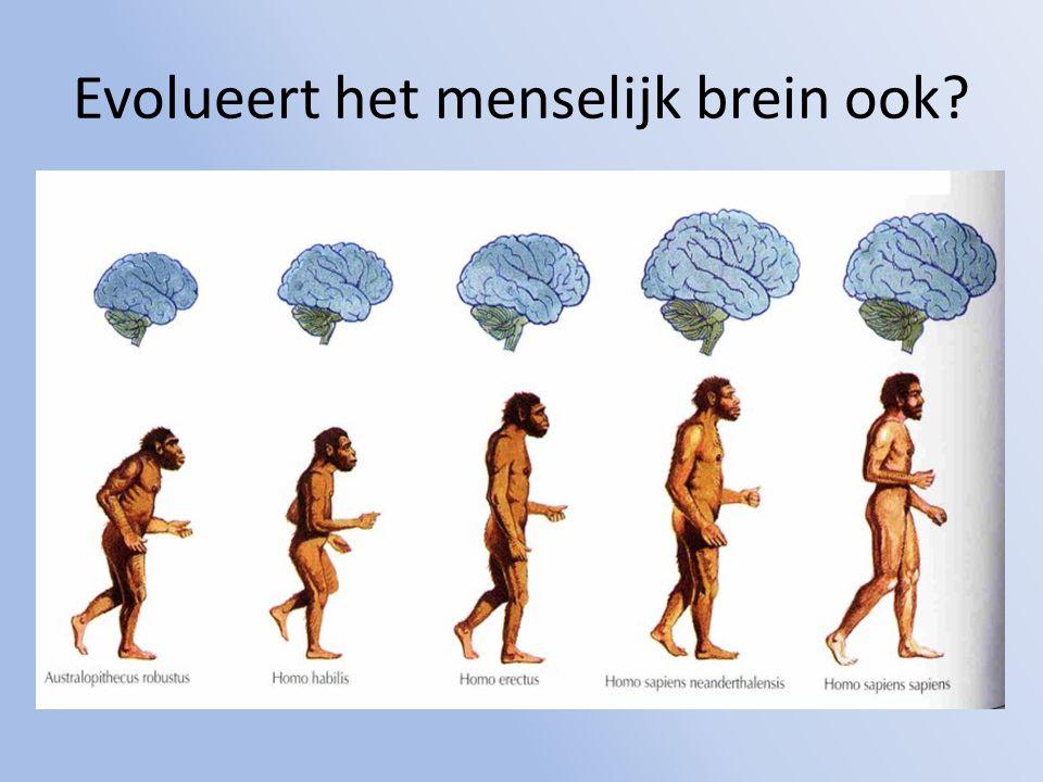 Evolueert het menselijk brein ook