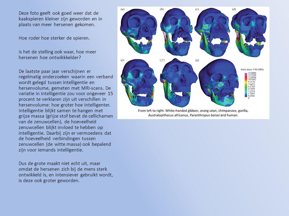Deze foto geeft ook goed weer dat de kaakspieren kleiner zijn geworden en in plaats van meer hersenen gekomen.