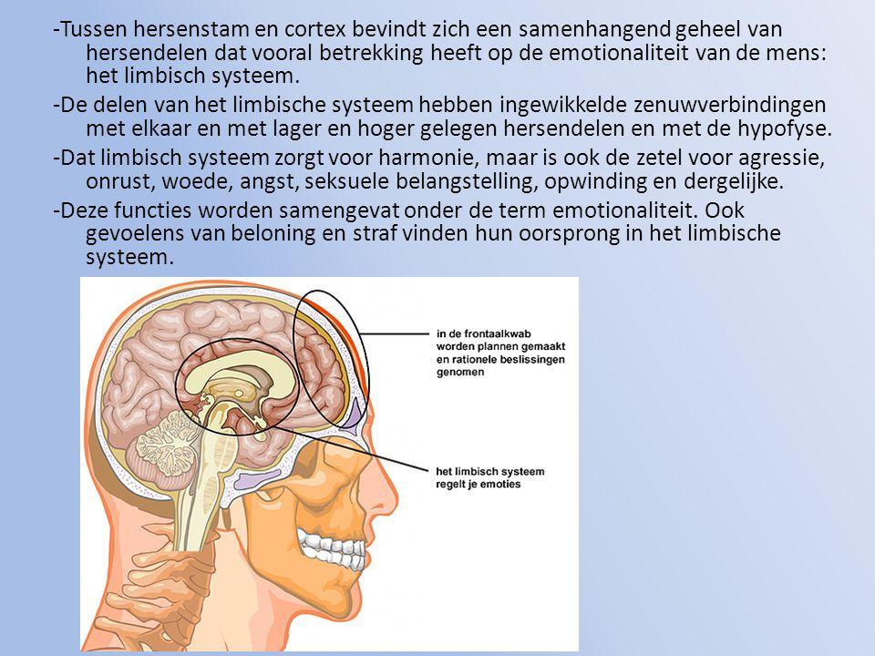 -Tussen hersenstam en cortex bevindt zich een samenhangend geheel van hersendelen dat vooral betrekking heeft op de emotionaliteit van de mens: het limbisch systeem.