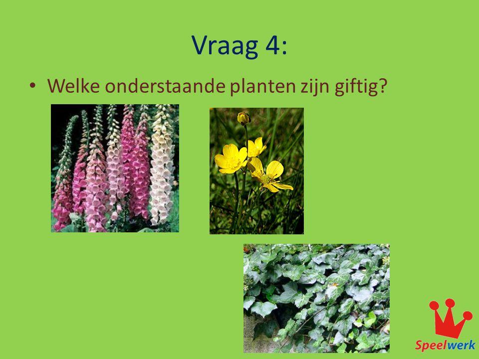 Vraag 4: Welke onderstaande planten zijn giftig