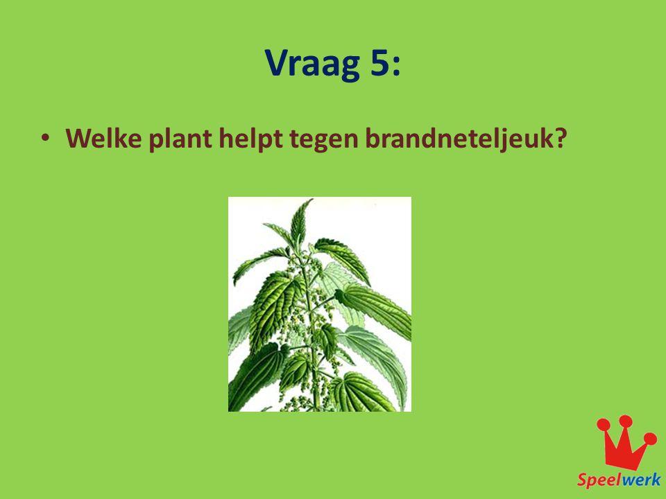 Vraag 5: Welke plant helpt tegen brandneteljeuk