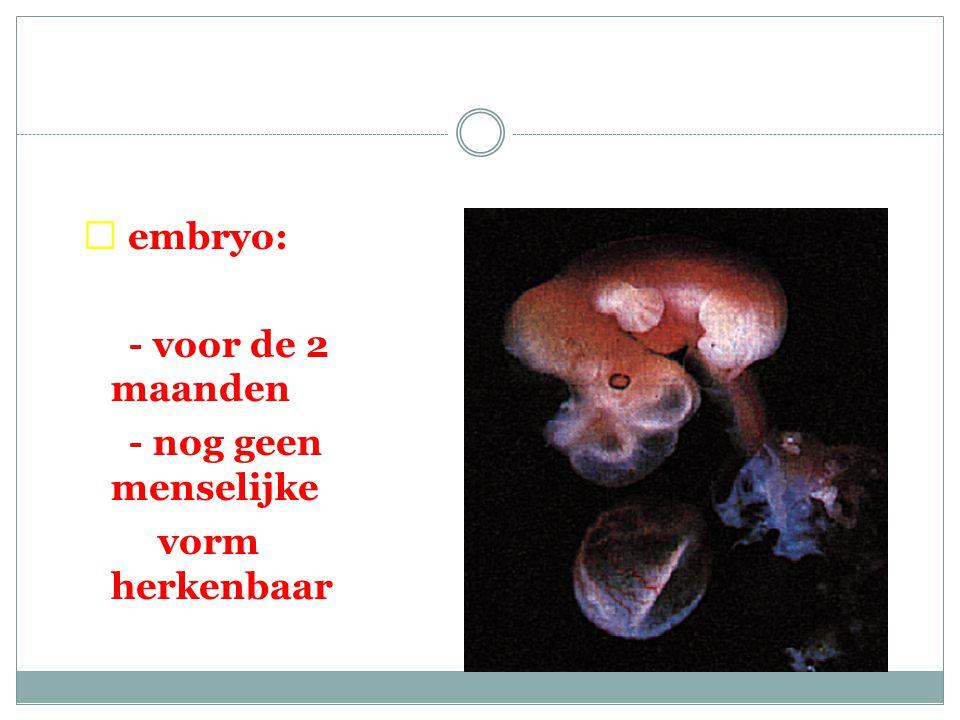  embryo: - voor de 2 maanden - nog geen menselijke vorm herkenbaar