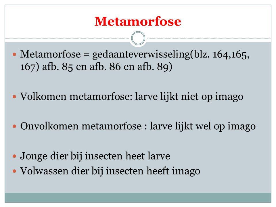 Metamorfose Metamorfose = gedaanteverwisseling(blz. 164,165, 167) afb. 85 en afb. 86 en afb. 89) Volkomen metamorfose: larve lijkt niet op imago.