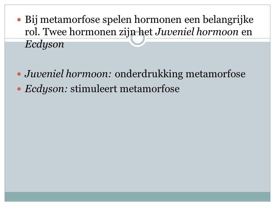 Bij metamorfose spelen hormonen een belangrijke rol
