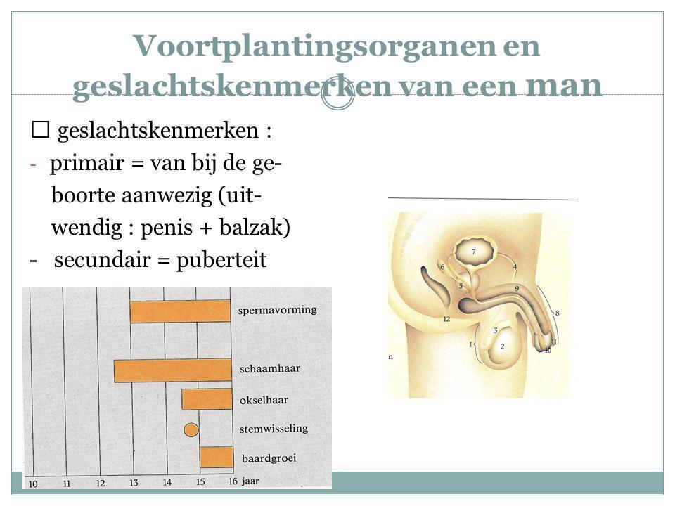 Voortplantingsorganen en geslachtskenmerken van een man