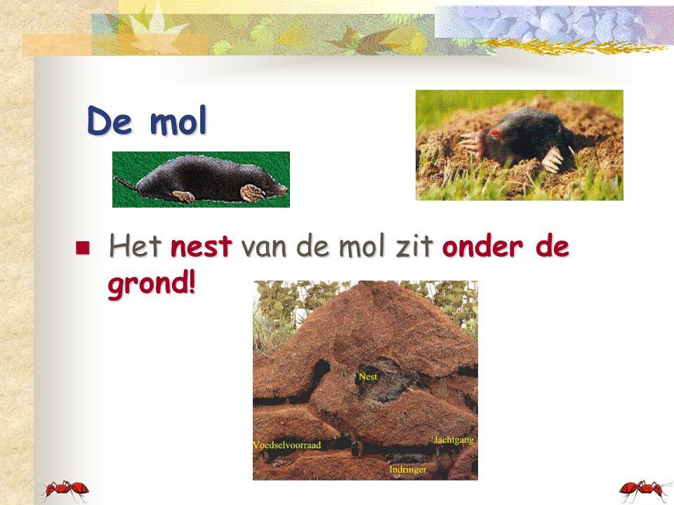 De mol Het nest van de mol zit onder de grond!