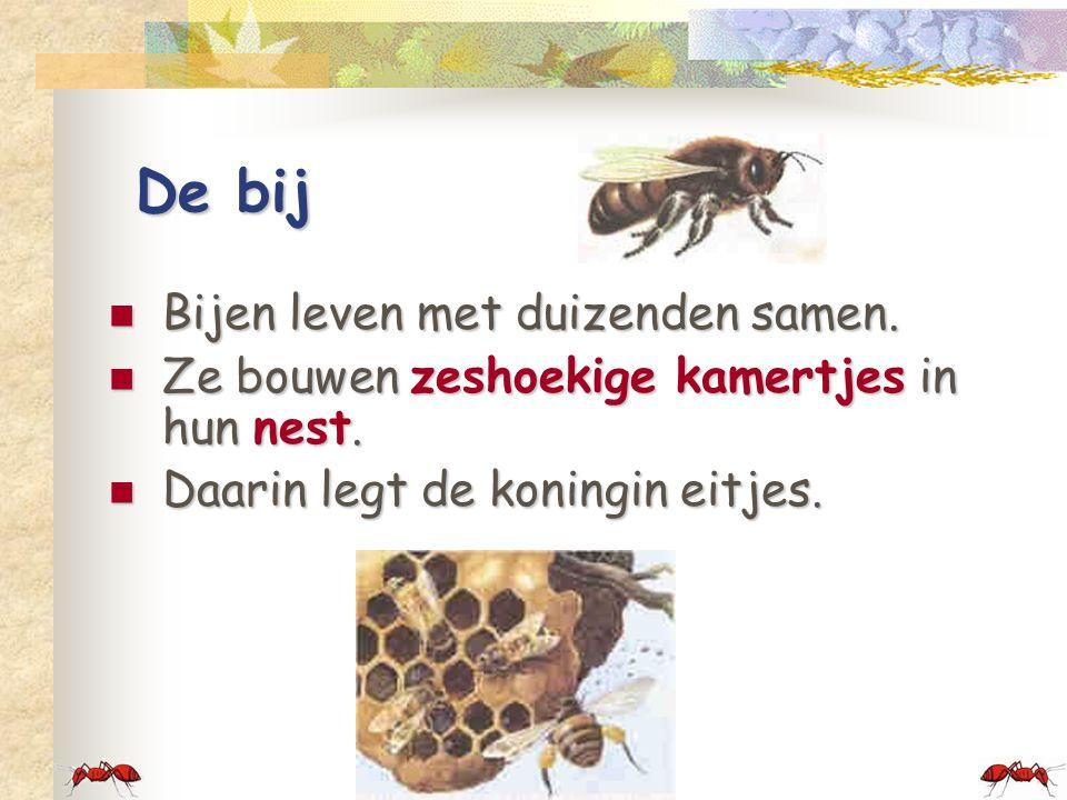 De bij Bijen leven met duizenden samen.