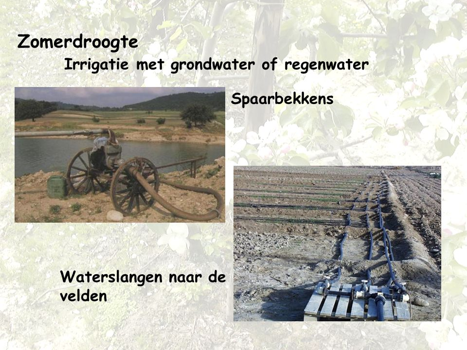 Zomerdroogte Irrigatie met grondwater of regenwater