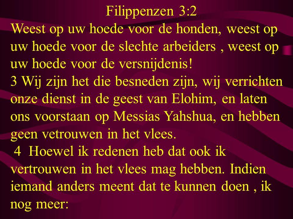 Filippenzen 3:2 Weest op uw hoede voor de honden, weest op uw hoede voor de slechte arbeiders , weest op uw hoede voor de versnijdenis!
