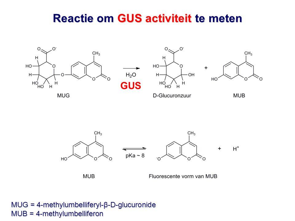 Reactie om GUS activiteit te meten