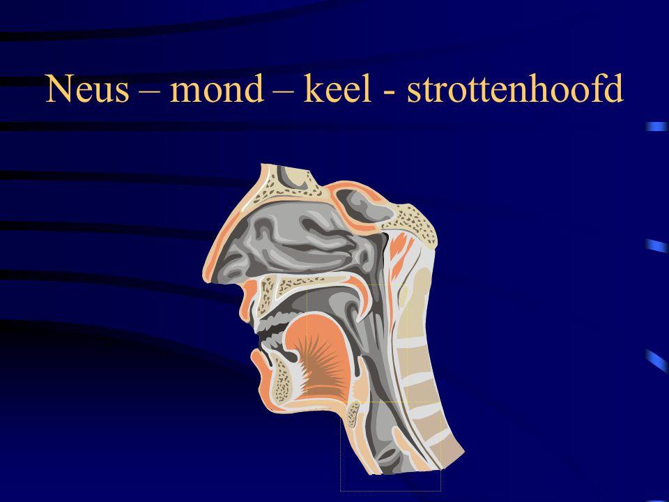 Neus – mond – keel - strottenhoofd