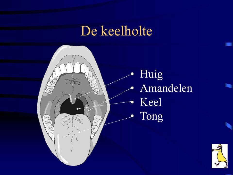 De keelholte Huig Amandelen Keel Tong