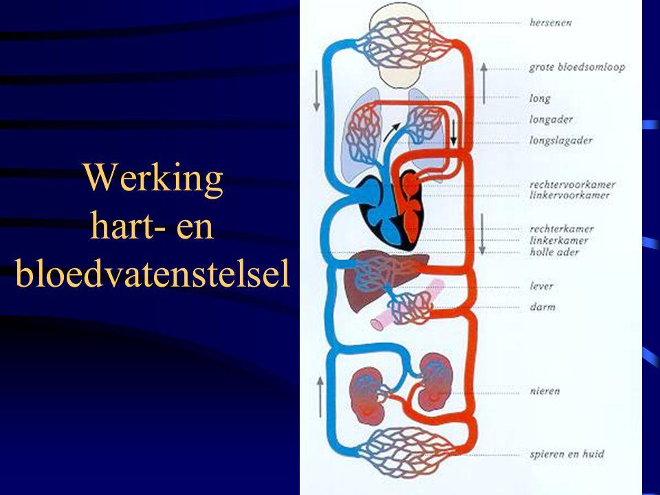 Werking hart- en bloedvatenstelsel