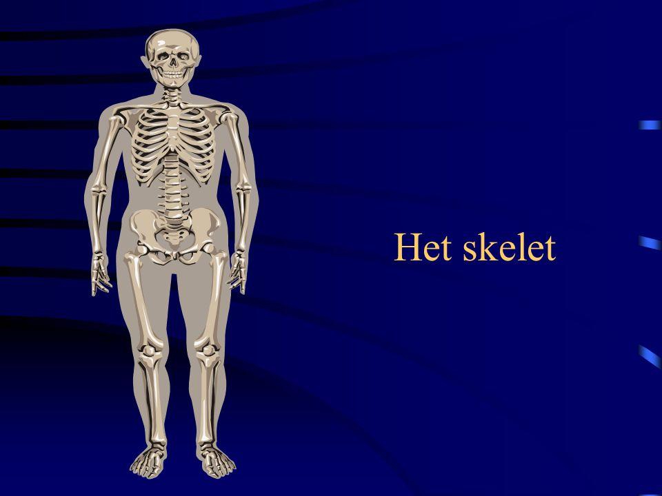 Het skelet