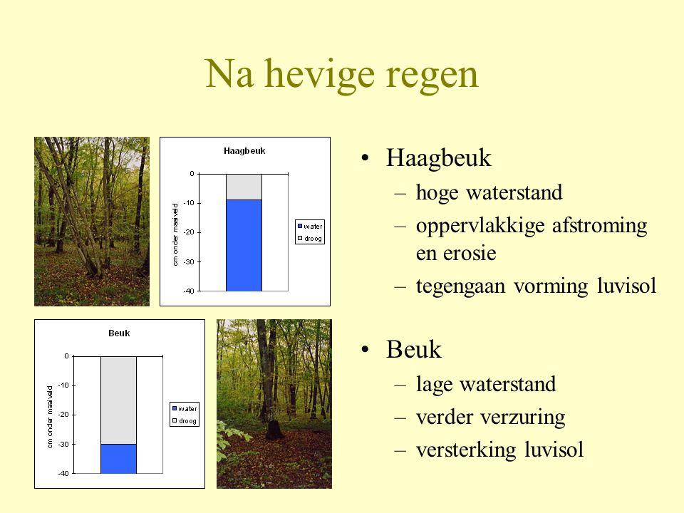 Na hevige regen Haagbeuk Beuk hoge waterstand