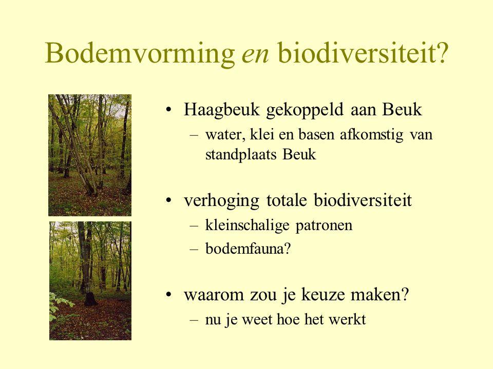Bodemvorming en biodiversiteit
