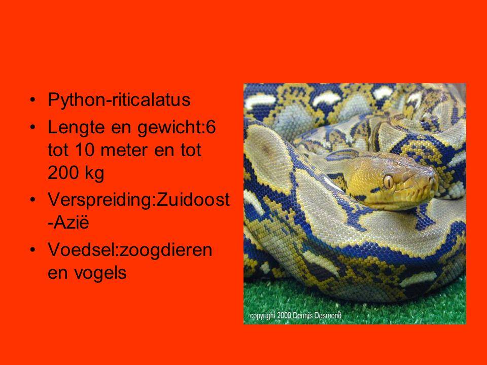 Python-riticalatus Lengte en gewicht:6 tot 10 meter en tot 200 kg.