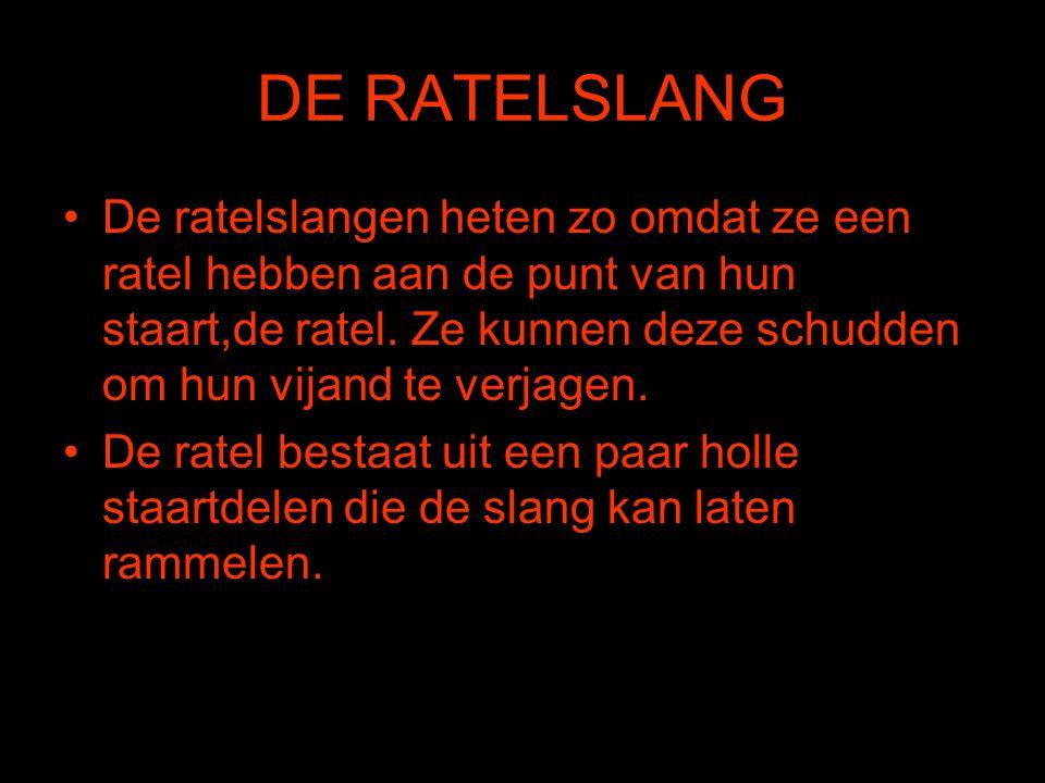 DE RATELSLANG