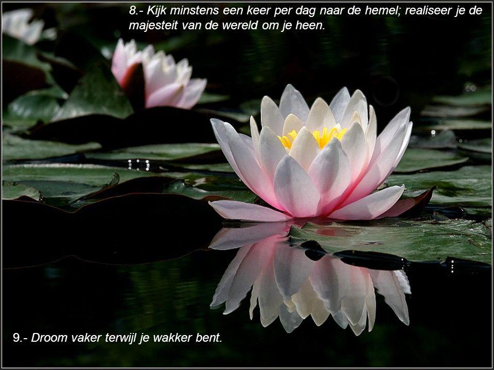 8.- Kijk minstens een keer per dag naar de hemel; realiseer je de majesteit van de wereld om je heen.