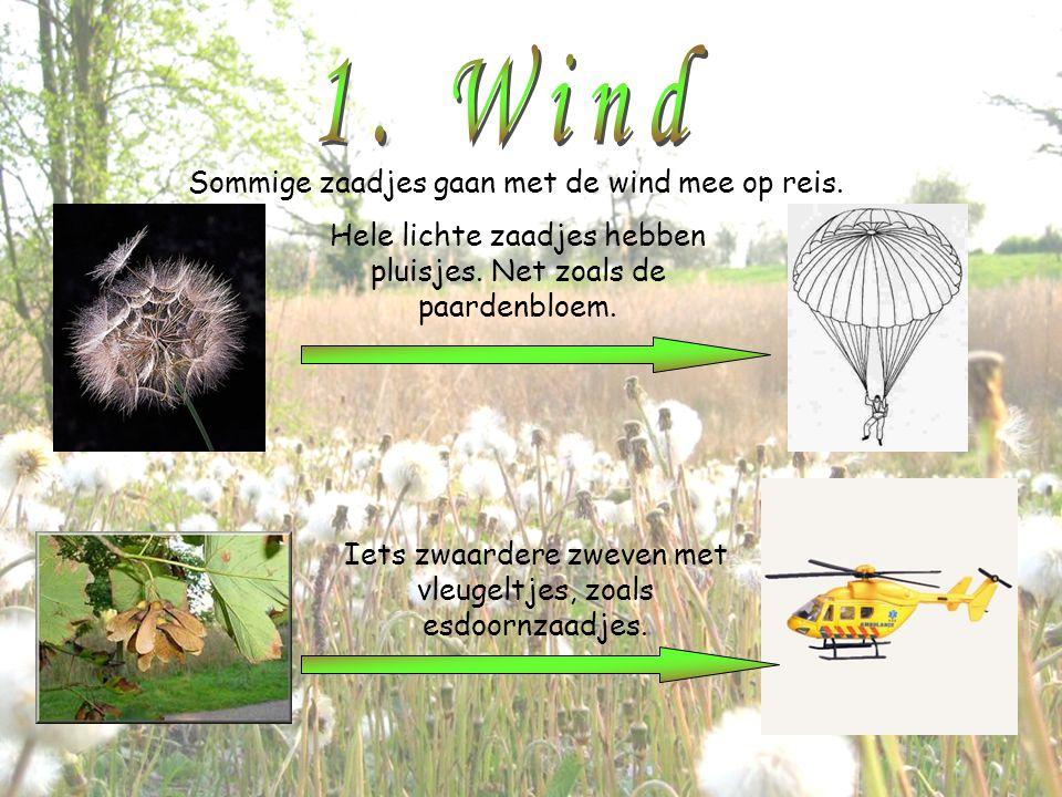 1. Wind Sommige zaadjes gaan met de wind mee op reis.