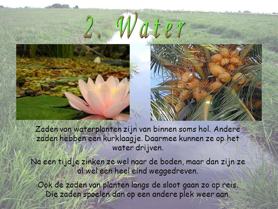 2. Water Zaden van waterplanten zijn van binnen soms hol. Andere zaden hebben een kurklaagje. Daarmee kunnen ze op het water drijven.