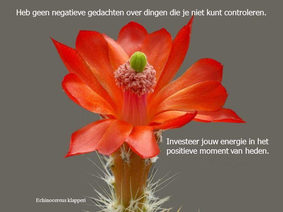 Heb geen negatieve gedachten over dingen die je niet kunt controleren.