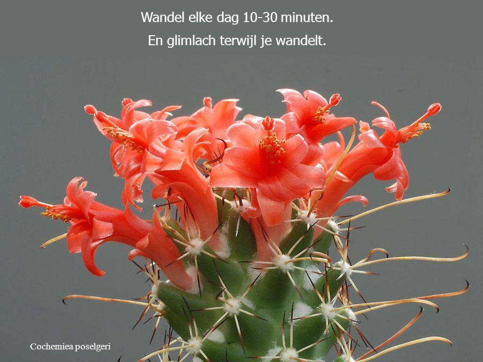 Wandel elke dag 10-30 minuten. En glimlach terwijl je wandelt.