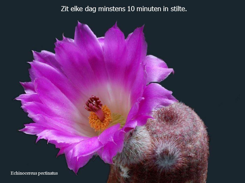 Zit elke dag minstens 10 minuten in stilte.
