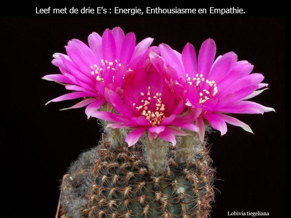 Leef met de drie E s : Energie, Enthousiasme en Empathie.