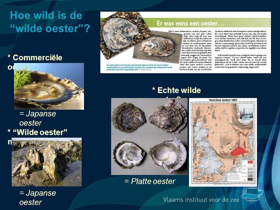 Hoe wild is de wilde oester