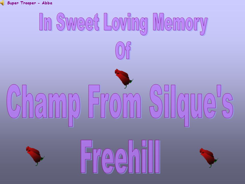 In Sweet Loving Memory Of Champ From Silque s Freehill