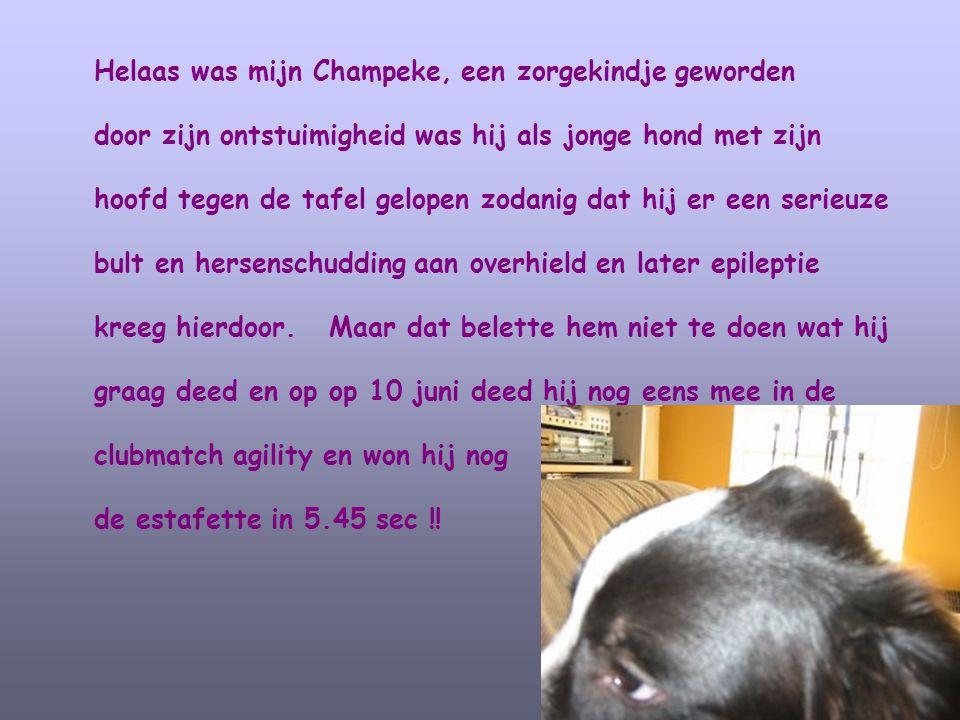 Helaas was mijn Champeke, een zorgekindje geworden