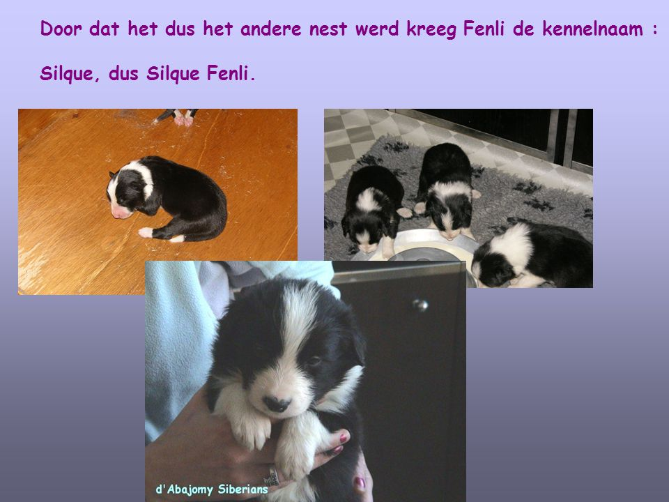 Door dat het dus het andere nest werd kreeg Fenli de kennelnaam :