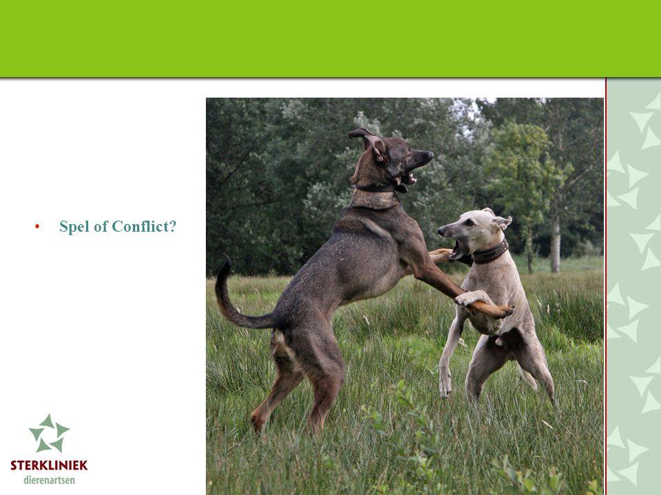 Spel of Conflict Spel van honden onderling maakt een heel groot deel uit van het bepalen van rangrelaties.