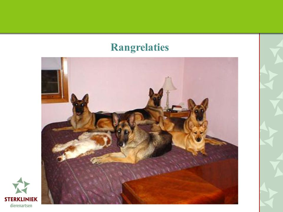 Rangrelaties