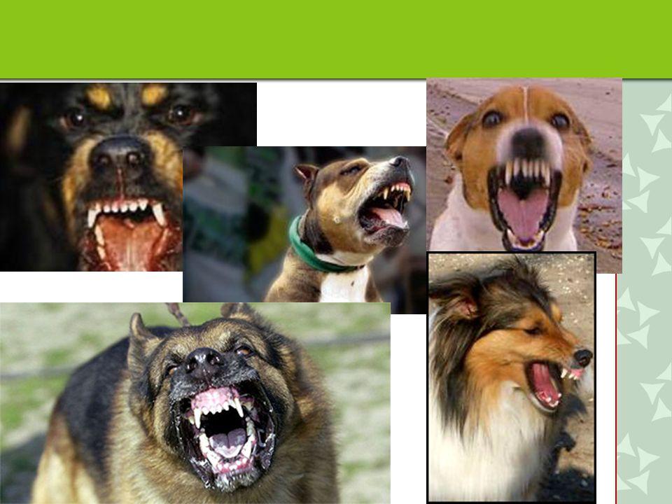 Agressie wordt door honden als laatste ingezet in het hele rijtje van signalen die aangeven dat er iets niet helemaal gaat zoals het moet, in de beleving van de hond.