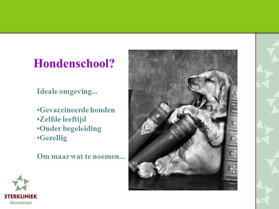 Hondenschool Ideale omgeving... Gevaccineerde honden Zelfde leeftijd