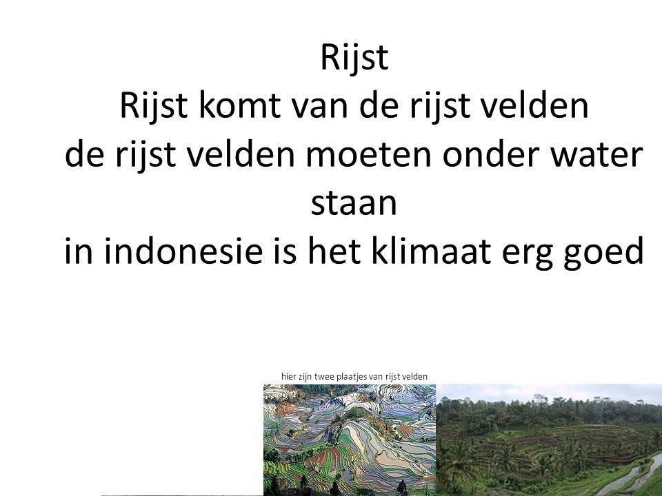Rijst Rijst komt van de rijst velden de rijst velden moeten onder water staan in indonesie is het klimaat erg goed hier zijn twee plaatjes van rijst velden