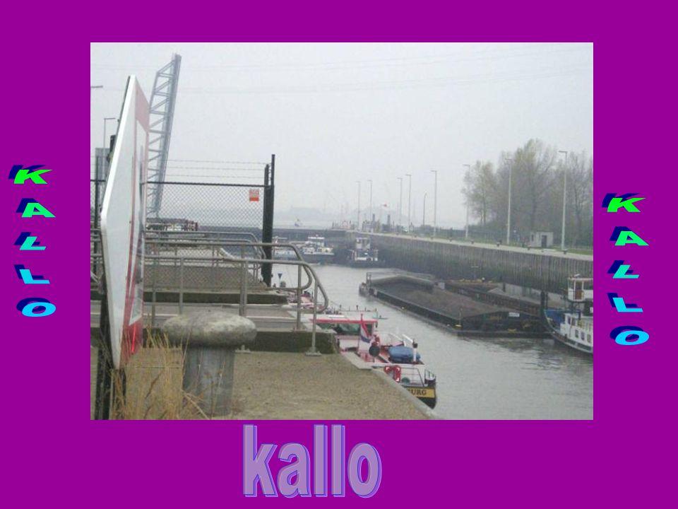 KALLO KALLO kallo