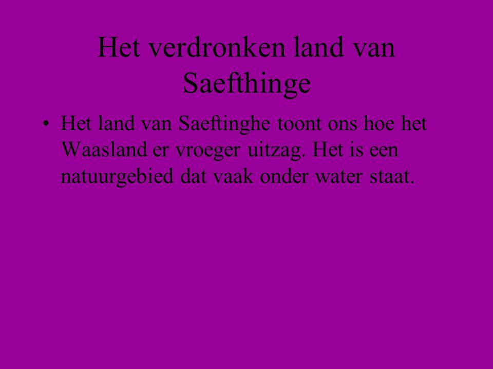 Het verdronken land van Saefthinge