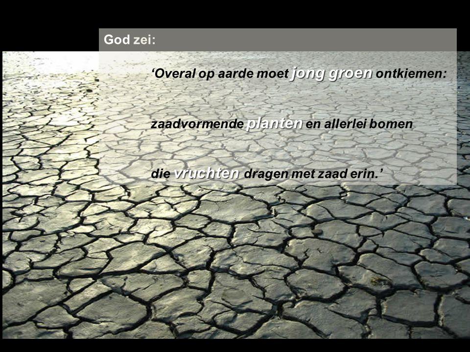 God zei: 'Overal op aarde moet jong groen ontkiemen: zaadvormende planten en allerlei bomen.